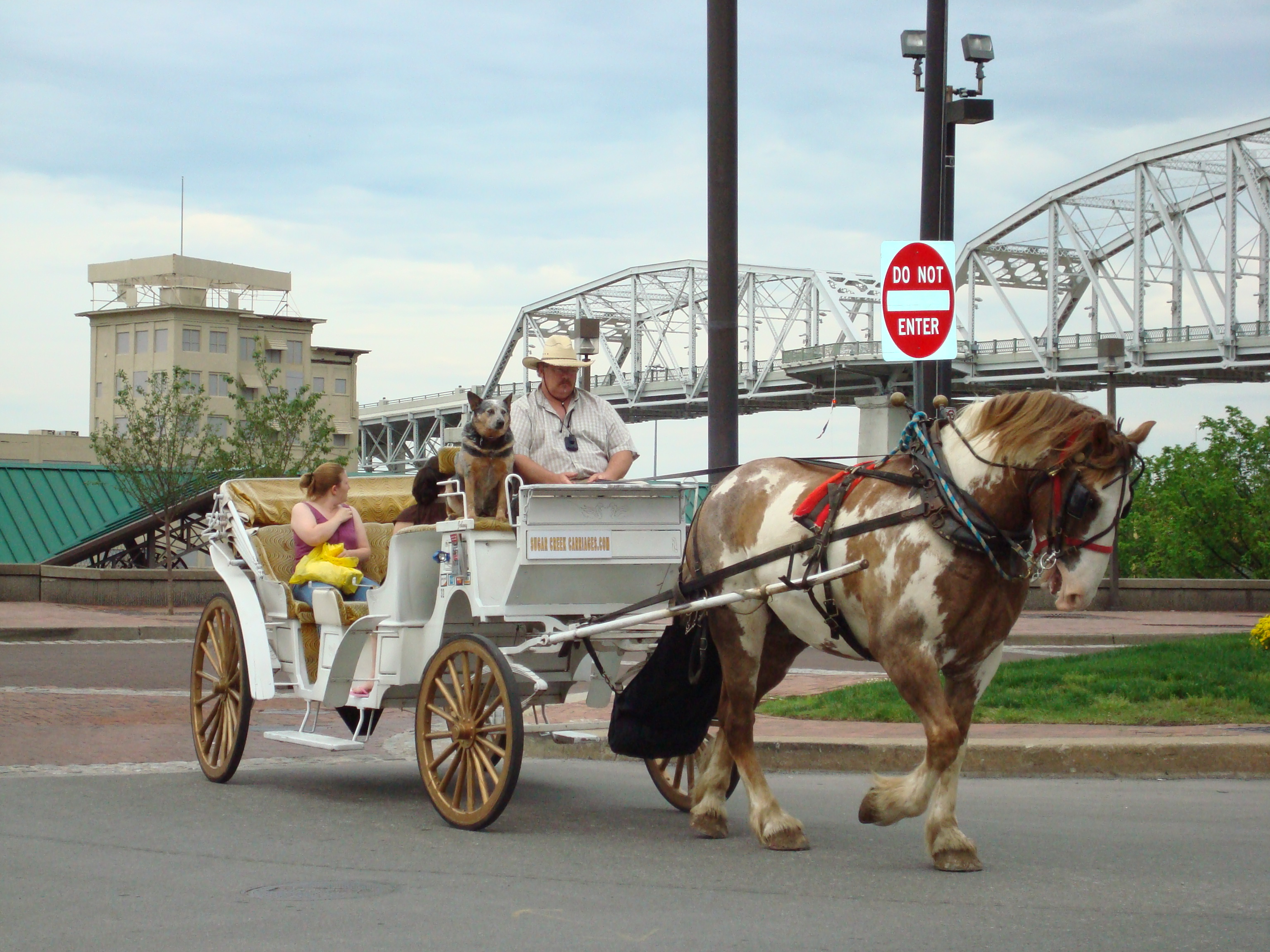 Buggy Ride Tennessee
