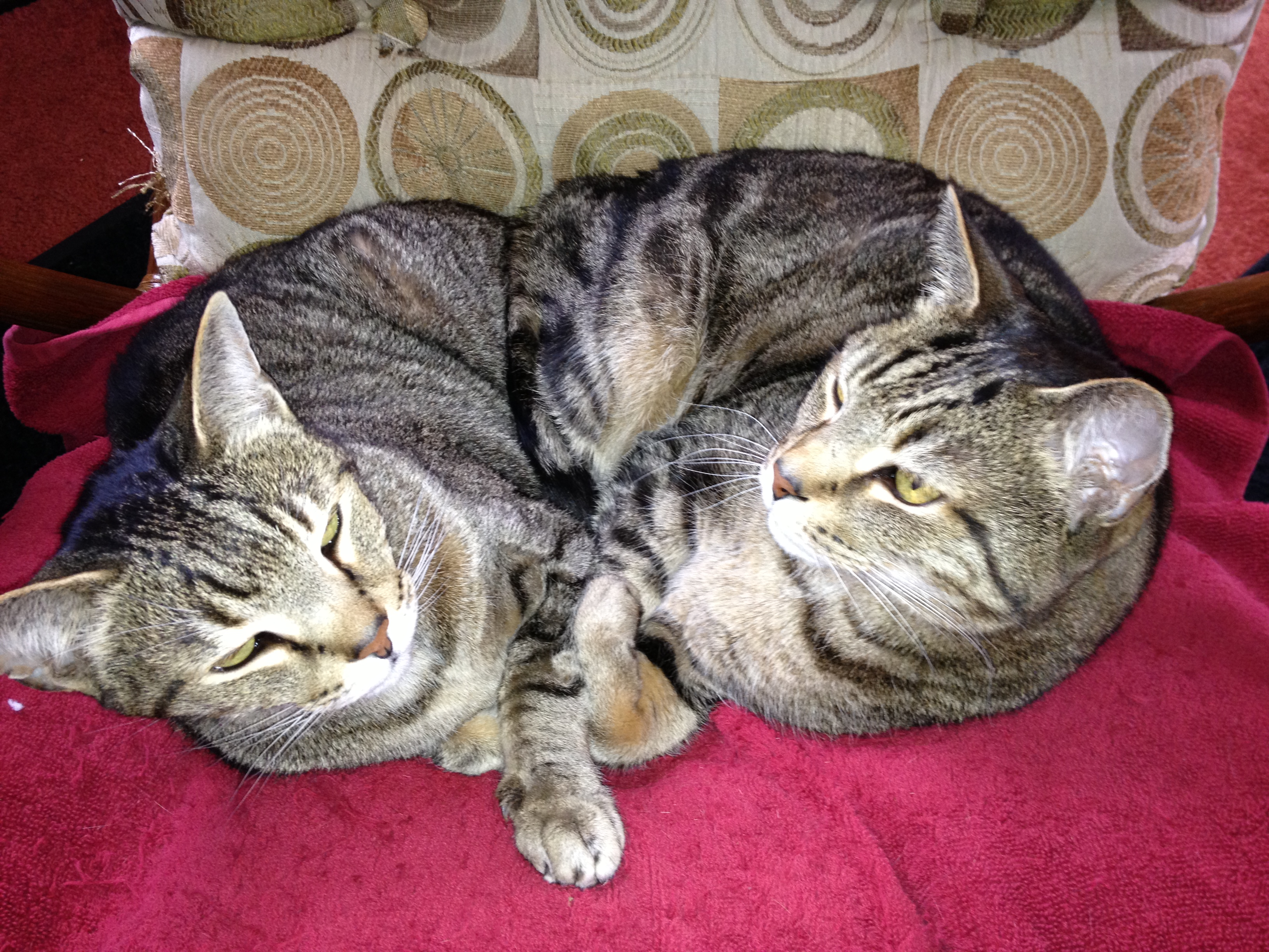 Two cats-Hanz and Franz