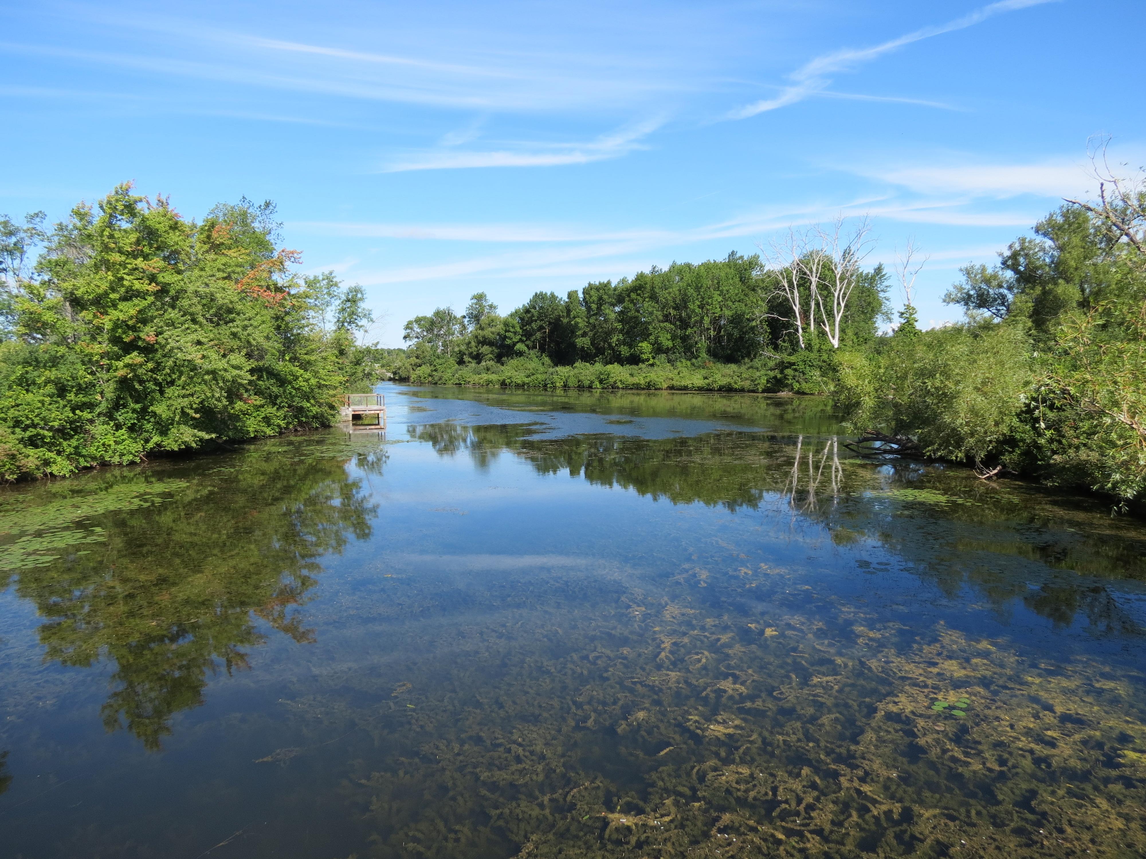 Clear water swamp near Canandaigua Lake