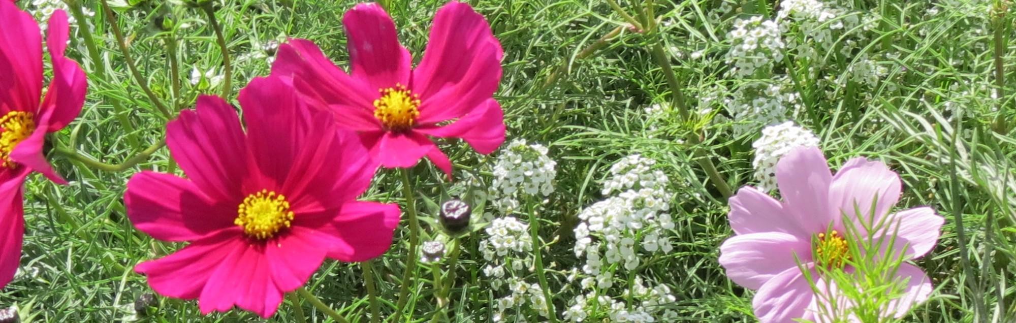 Wild_red_flowers
