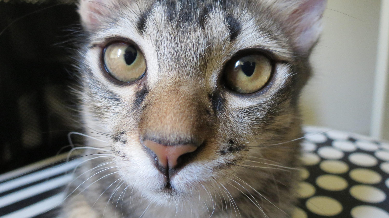 Cumi - Taken at Eye Level